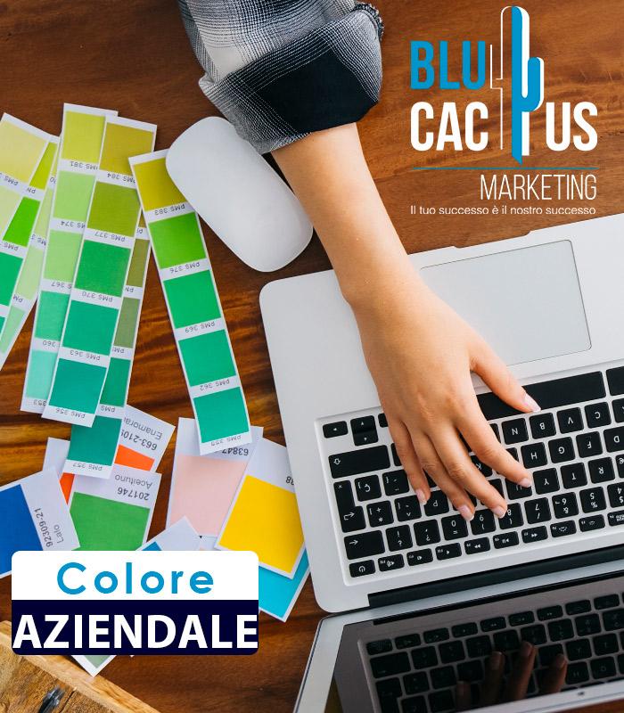 Blucactus Design d'identità aziendale Colore aziendale